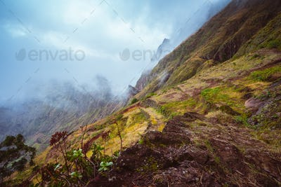 Rugged mountain peak overgrown with verdant grass and encase by the fog. Some plants growing in