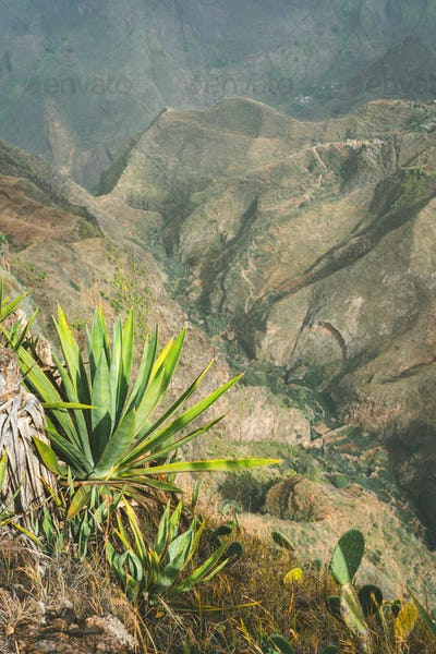 Impressive mountain landscape, cultivation of lotus on the bottom of the canyon. Coculi Santo Antao