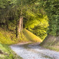 Tunnel of Foliage in unpaved rural road