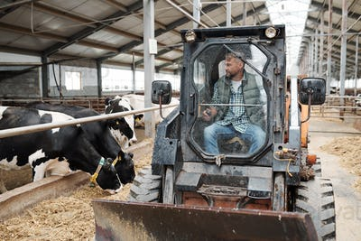 Farmhouse worker sitting in tractor while moving along aisle of animal farm