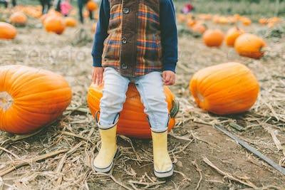 Little Boy in the Pumpkin Patch