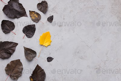 Yellow leaf among dark on gray background with empty space