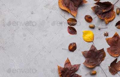 Fallen autumn leaves on gray background with copy space