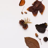 Autumn Frame with dry brown leaves and cones on white
