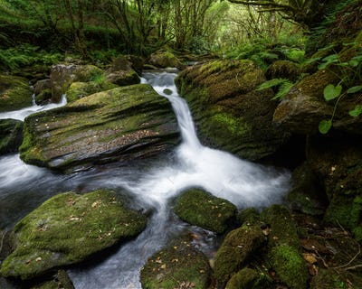 Small Waterfall between Mossy Rocks and Lush Vegetation