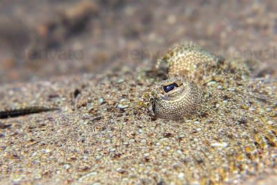 Close up of a flounder eye