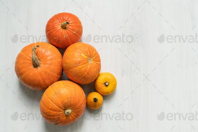 Group of ripe orange big and small pumpkins on white background in isolation