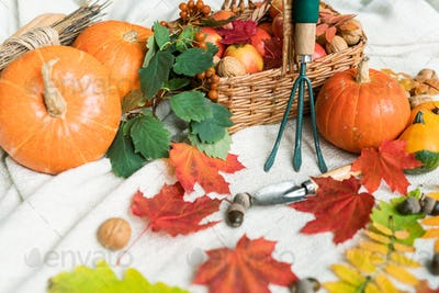 Composition of pumpkins and apples, walnuts, acorns, leaves and garden worktools