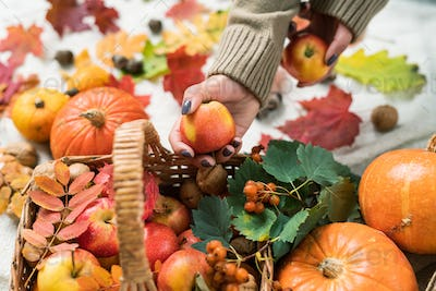 Young woman in sweater taking ripe apple from basket with pumpkins and berries