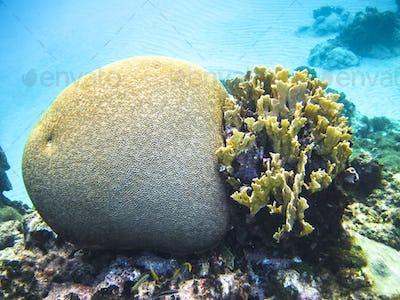 Various Types of Coral Growing Underwater in the Caribbean Sea