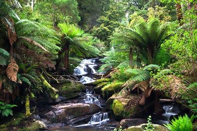 Small Creek Flowing Through Temperate Rainforest in Australia