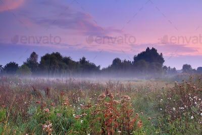 Misty morning on the field