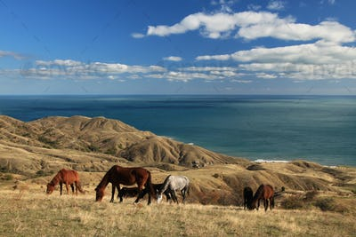 Wild horses on the sea landscape