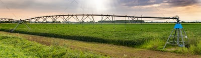 Irrigation sprinkler in agriculture land. Sunset panoramic image