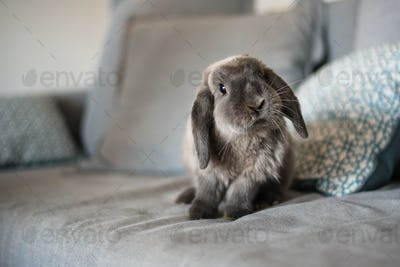 cute little bunny on the sofa posing to the camera