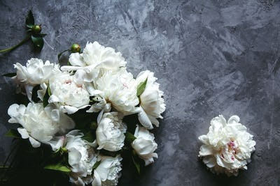 Beautiful peonies on grey concrete background. Wedding, birthday, valentine's day, gift