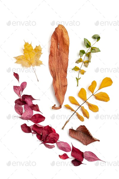 Dry autumn leaves of different colors on a white background. Iso