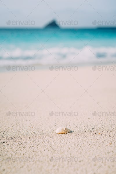 Seashell on sandy beach with defokused white foam of rolling ocean waves in background. Tropical
