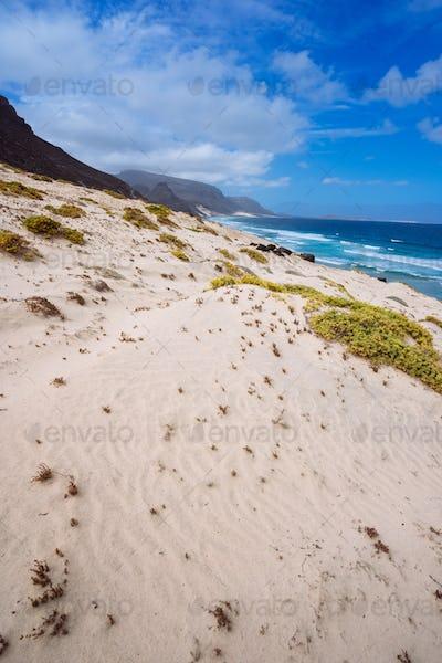 Sandy dunes with some desert plants in stunning desolate landscape of atlantic coastline. Baia Das