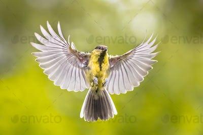 Bird in flight on green garden background