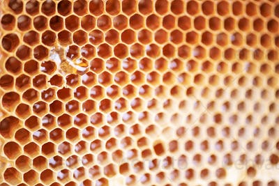 Wooden frame with honeycomb full of honey. Close up background for design. Macro. Honey beehive