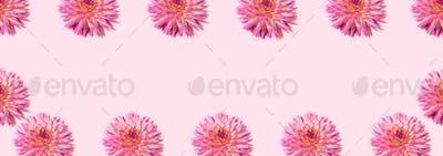 Floral pattern made of pink flowers over pastel pink background. Festive spring and summer frame