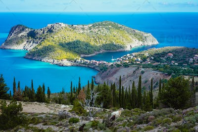 Two goats animal standing under cypress trees against amazing mountainous landscape of Assos in