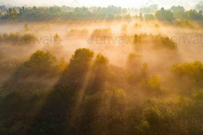 Beautiful misty dawn over the trees. Aerial view
