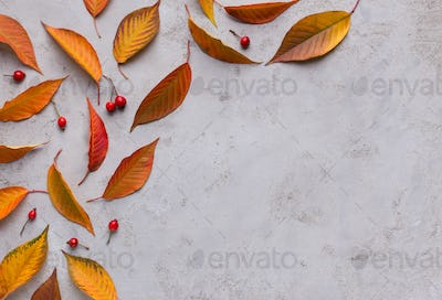 Colorful autumn fallen leaves creating frame on gray