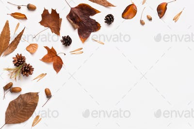 Autumn flat lay of brown fallen leaves on white background
