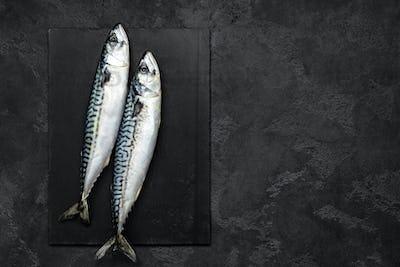 Mackerel. Fresh raw fish, top view, flat lay
