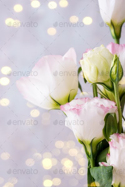 Eustoma flowers meadow with light bokeh. Blank for postcards