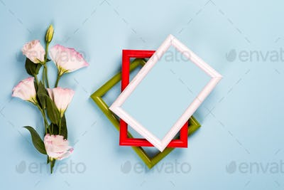 Empty color frames and flowers eustoma on blue paper background with copy space. Flat lay. Love