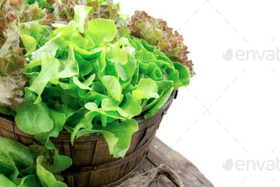 Vegetables on basket with isolated background