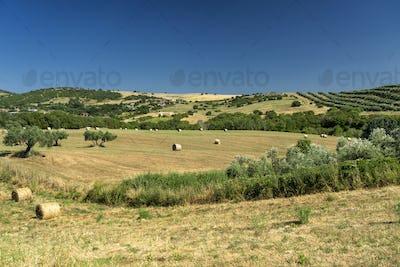 Rural landscape near Tuscania, Lazio