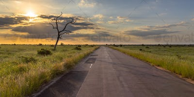 Paved road through savanna