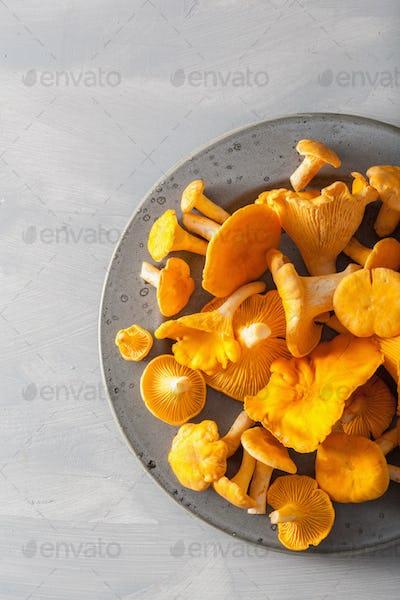 raw fresh chanterelle mushrooms on gray background