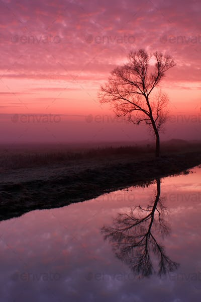 Reflection of tree in the river