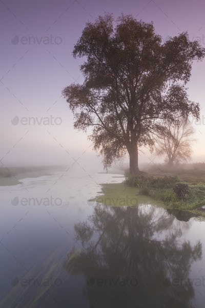 Beautiful morning mist landscape near a small river