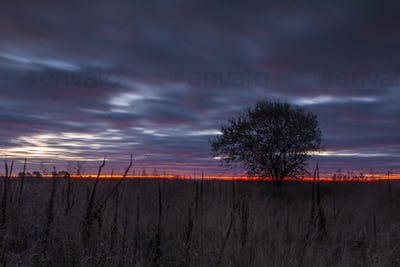 Tree in a field on a background of dramatic sunset