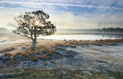 oak tree by wild lake during frosty morning