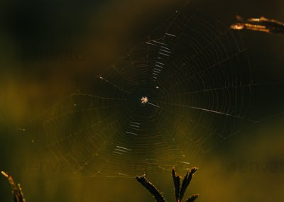 Close-up view of spider web in the morning of Summer