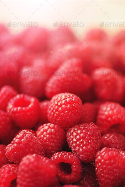 Ripe raspberries macro. Selective focus. Fruit background with copy space. Summer and berries