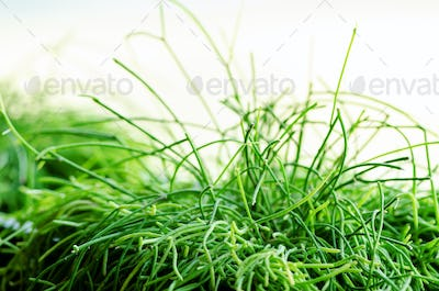 Green Plants or Grass in black Container, pot for Home, Restaurant, Cafe and Office Decoration