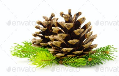 brown pine cone and green line