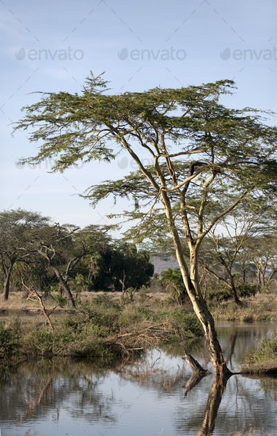 Seronera river in the Serengeti, Tanzania, Africa