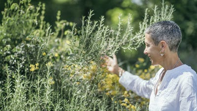Gratitude Gesture to the Nature, Woman with Rosemary Plant