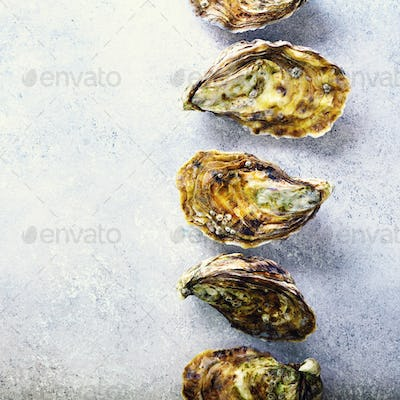 Fresh oysters on white, grey concrete stone background. Top view, copy space. Square crop