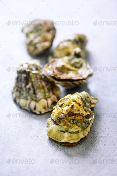 Fresh oysters on white, grey concrete stone background. Top view, copy space