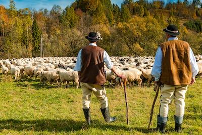 Traditional Polish Highland Shepherds in Regional Clothing at Sh